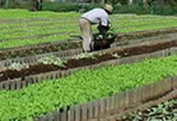 Cuban farmers boost Organic Agriculture
