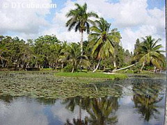 Over 40 papers on Cuba's northern swamp examined