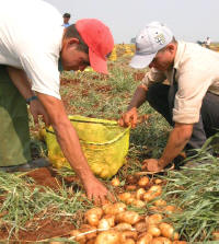 Food Support for Eastern Cuban Provinces