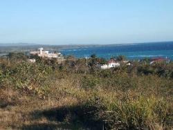 Specialists and Producers Establish Strategies to Fight Marabú