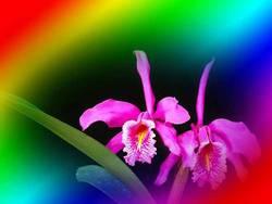 Orquidea2.jpg