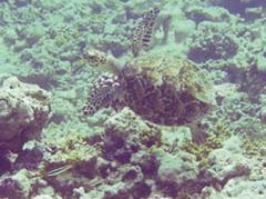 Spanish expert praises marine wildlife in Guanahacabibes