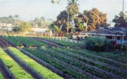 Cuban Farmers Practicing Ecological Agriculture