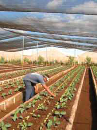 In Cuba Ciego de Ávila Ahead in Horticulture Investments.