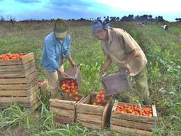 Lands Granted in Ciego de Avila Cuba Already Producing