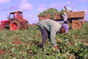 In Cuba: Avilanian People Ready to Produce More Food