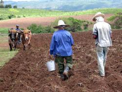 Agricultural and Forest Technicians Receive International Help for Different Projects in Las Tunas
