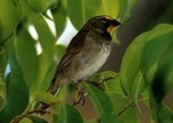 Endemic Caribbean birds cohabit in Escaleras de Jaruco, Havana Province, Cuba