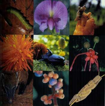 En Camaguey aplican proyecto internacional de biodiversidad