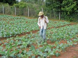 Cuba aims to use biological fertilizers on a large scale in agriculture