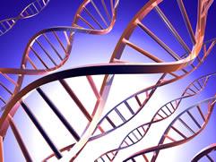 Genetic biodiversity