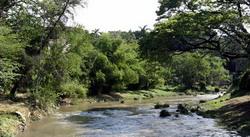 Forest Havana