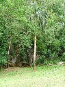 Wooded area in Las Tunas province of Cuba has increased by 14 percent