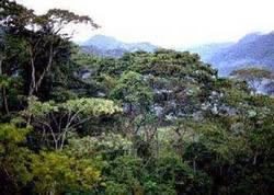 Al rescate del manto forestal en Las Tunas provincia menos boscosa de Cuba