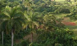bosques-pinareos