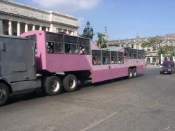 Havana Bus (Camello)