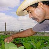In Cuba: Celebrate May 17 the Farmers Day