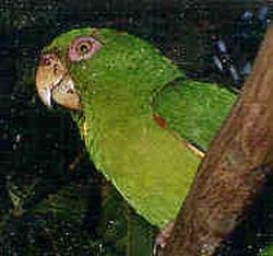 Endemic cuban animal species endangered