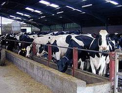 Livestock breeders take advantage of rains in Las Tunas