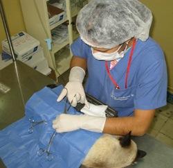 Reanudarán en la universidad cubana de Santiago de Cuba formación de medicos veterinarios