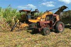 Sugar Minister Congratulates Workers of Las Tunas, Cuba