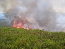 Cuba Increases Forest Fire Control