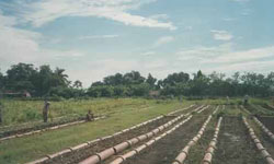 cuban-crops-better-after-hurricanes-.jpg