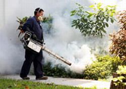 Cuba is free of dengue thanks to epidemiologic system