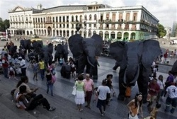 Elephants Loose in Havana