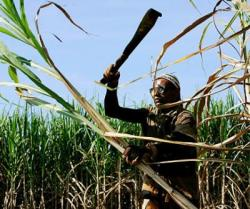 Cuban scientists met this week to analyze the possibilities to produce ethanol from sugarcane.
