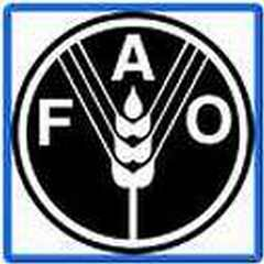 fao_0.jpg