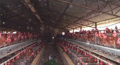Poultry raising facilities