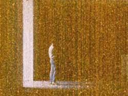 golden pintura