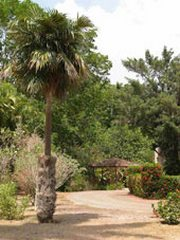 The Botanical Garden of Las Tunas Cuba
