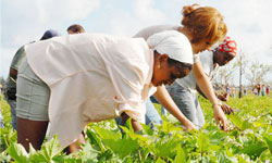 More than 120 Young People Support Agricultural Recovery on Cubas Isla de la Juventud