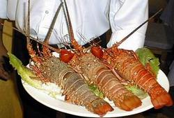 More Efficiency for the industry of the Cuban Lobster