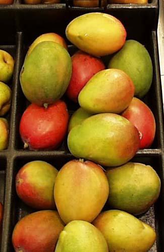 Mango Harvest Started in Ciego de Ávila, Cuba