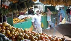 Pobre produccion de citricos en Cuba en 2007