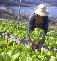 Organic Honey Production Increases in Cuba