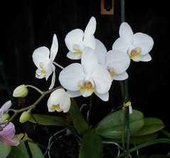 Cuban Botanical Garden has 400 orchid breeds