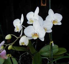 Cuban Botanical Garden has 400 orchid breeds