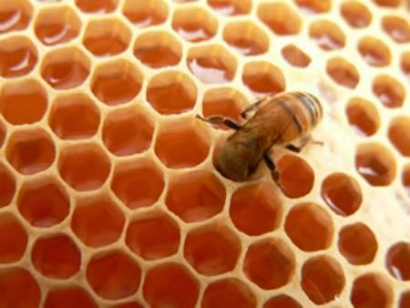 Miel de abejas en Pinar del Rio Cuba