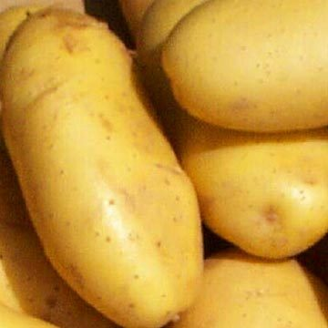 Cuban Government Fosters Potato Production