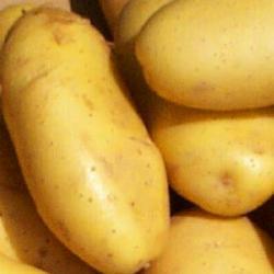 North Dakota potatoes
