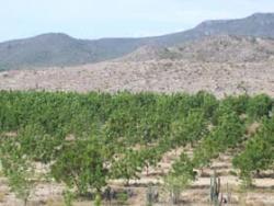 Cubas arid southeast turns green