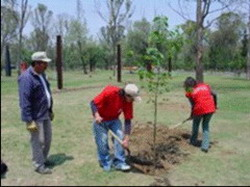 Every inhabitant in Camagüey to plant a tree