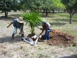 Las Tunas, Cuba Protects Its Soil