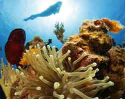 submarinismo fondomar