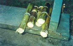 New promising horizon for sugar cane in Cuba