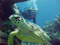 Camagüey takes actions favouring the protection of turtles